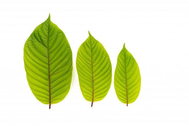 Kratom: Basic Information You Need To Know